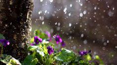 Alza le parole non la tua voce è la pioggia che fa crescere i fiori, non il tuono  Rumi