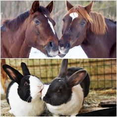 Interesting pictures, like kissing animals? http://veu.sk/index.php/aktuality/1494-zaujimave-fotografie-ako-sa-bozkavaju-zvierata.html #interesting #pictures #like #kissing #animals