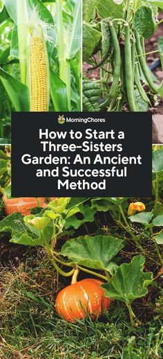 How to Start a Three-Sisters Garden: An Ancient and Proven MethodYou can find Companion planting and more on our website.How to Start a Three-Sisters Garden:. Garden Types, Urban Gardening Berlin, Organic Gardening, Gardening Tips, Vegetable Gardening, Kitchen Gardening, Container Gardening, Gardening Gloves, Herb Container