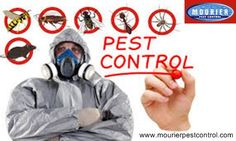 Call @ 9999787571. Pest control service in Sohna Road Gurgaon is able to eradicate the presence of contagious pests with instant effects. Choose your premium pest control service for cockroach.