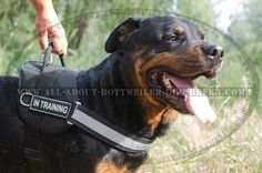 #Rottweiler #Nylon #Harness with Reflective Front Strap $39.90   www.all-about-rottweiler-dog-breed.com