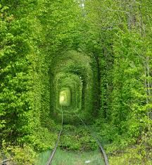 Tree Tunel, Ukraine - Buscar con Google