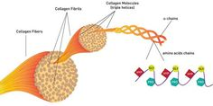 What is Collagen Protein? A Complete Guide to Collagen Benefits and Uses Collagen Pills, Collagen Drink, Collagen Protein, Caviar, Health Benefits Of Collagen, Eczema Scars, What Is Collagen, Acide Aminé, Good Skin