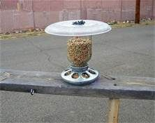 good idea... get the 'chick' feeder bottom from TSC :)