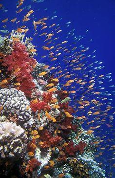 Snorkel BONAIRE-CARIBBEAN ISLANDS
