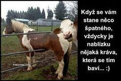 Farm Animals, Funny Animals, Cute Animals, Smiling Animals, Funny Horses, Animal Pictures, Cool Pictures, Funny Pictures, Random Pictures