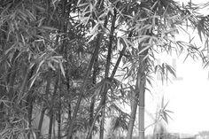 Beautiful Bamboo - Fototapeten & Tapeten - Photowall