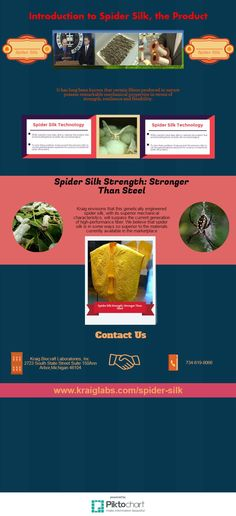 It has long been known that certain fibers produced in nature possess remarkable mechanical properties in terms of strength, resilience and flexibility.Kraig envisions that this genetically engineered spider silk, with its superior mechanical characteristics, will surpass the current generation of high-performance fiber. We believe that spider silk is in some ways so superior to the materials currently available in the marketplace. Spider Silk, Current Generation, Flexibility, Fiber, Strength, Engineering, Nature, Naturaleza, Back Walkover
