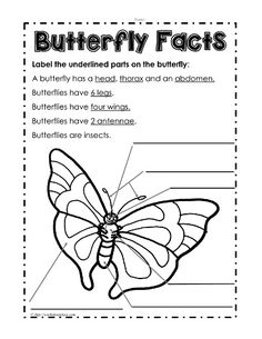 butterfly diagram diagram butterfly and students rh pinterest com Printable Butterfly Body Printable Butterfly Body