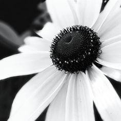 Black and white flower. Photography by Aubree. Oklahoma.