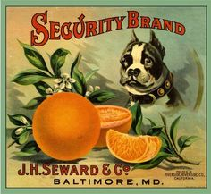 Riverside Security Boston Terrier Dog Orange Citrus Fruit Crate Label Advertising Art Print