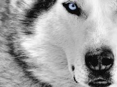 O'l Blue Eye's
