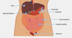 la santé pour tous : Perdre la graisse dans le ventre : 6 vérités