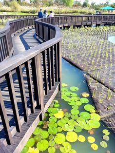 Lovely lily pads in Daejeon, South Korea Daejeon, Cities In Korea, Living In Korea, Korean Peninsula, South Korea Travel, World Cities, Secret Places, Travel Info, Travel Goals