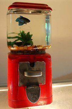 old bubble gum machine transformed into fish aquarium.