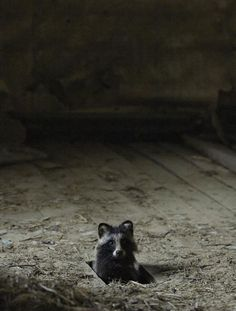 KAI FAGERSTRÖM abandoned-house-in-finland-overtaken-by-animals