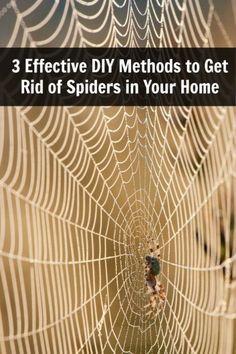 3 Effective DIY Methods to Get Rid of Spiders in Your Home - DIY & Crafts