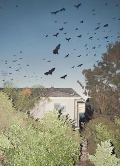 Adam Kremer. And then, all at once, it happened (bats of melbourne), 2011.   Website Tumblr