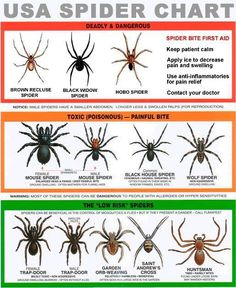 "USA Spider Chart. You should know which ones are dangerous and which ones aren't. I'm assuming the ones not listed are to be considered ""No Risk."""