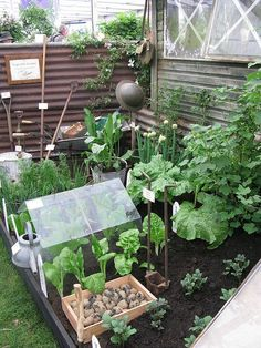 mini veggie garden, I like the layout. Would like to have a small one just like this.