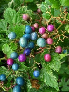 Soy Sauce Noodles, Color Inspiration, Vines, Berries, Green, Nature, Plants, Porcelain, Colors
