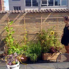 Samlet plantekassekit med skjuler og espalier i lærk. Det komplette sæt til at starte din egen selvvandende plantekasse-have. Der medfølger en plantesæk på 50 liter og lidt frø. Så skal du bare …