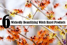 6 Wickedly Beautifying Witch Hazel Products | Eau Talk - The Official FragranceNet.com Blog