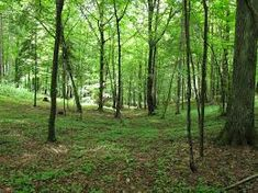 Image result for \ forests