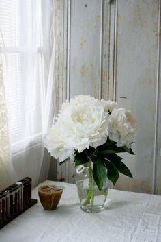 芍薬 Yukiko Masuda, lovely light and flowers