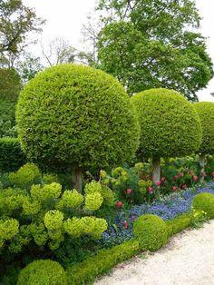sichtschutz heckenpflanzen formen garten kugeln buchsbaum tulpen