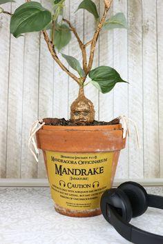 Mandrake tutorial: a harry potter diy project *holidays we c Harry Potter Plants, Harry Potter Mandrake, Deco Harry Potter, Harry Potter Classroom, Theme Harry Potter, Harry Potter Room, Harry Potter Birthday, First Harry Potter, Cute Harry Potter