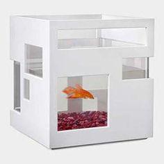 Fish Hotel Tank #moma #bullett