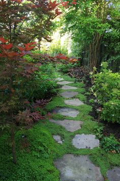 Japanese style side garden. Jap maple, pavers set in ground over, shrubby underbrush. Would hold up well to dogs