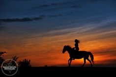 Shelley shares her perspective on horse photography and offers some tips for aspiring photographers.