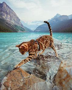 "Suki The Cat (@sukiicat) on Instagram: ""Splashing my way to the weekend """