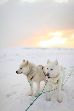 Dogsledding at Sunrise in Iceland | photography by entouriste.com