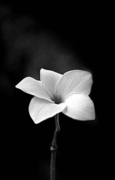 #flower #blackandwhite