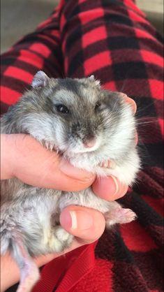 Cute Hamsters, Cute Animals, Creatures, Pretty Animals, Cutest Animals, Cute Funny Animals, Adorable Animals