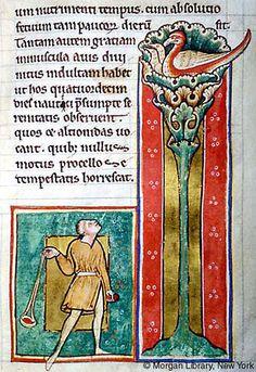 Medieval Bestiary : Cinnamologus Gallery