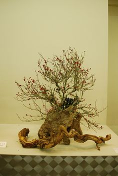 Ikebana-tree/root