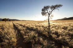 A dirt track running through long grass in the wilderness