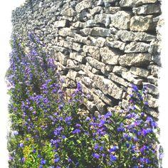 Stenmur på Närsholmen #Gotland