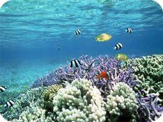 12 best BVI snorkeling spots