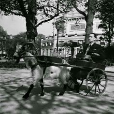 Salvador Dalí on a carriage drawn by his goat, 1953.