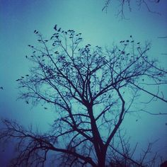 Crows, as seen from the Midtown Greenway in Minneapolis