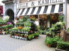 Cool!! Te esperamos en Lafuente Floristas nuestra Floristeria en Santander Cantabria desde 1855 www.lafuentefloristas.es