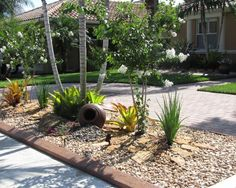 waterless landscaping ideas