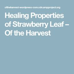 Healing Properties of Strawberry Leaf – Of the Harvest