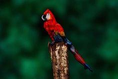 【衝撃の事実】この鳥の正体が人間だなんて…信じられますかーッ!?