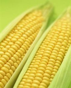 Growing sweet corn in a container -- what you need to know for good results